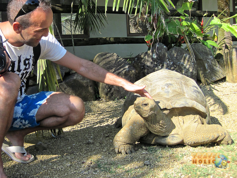 Visite tortue géante Ile Maurice