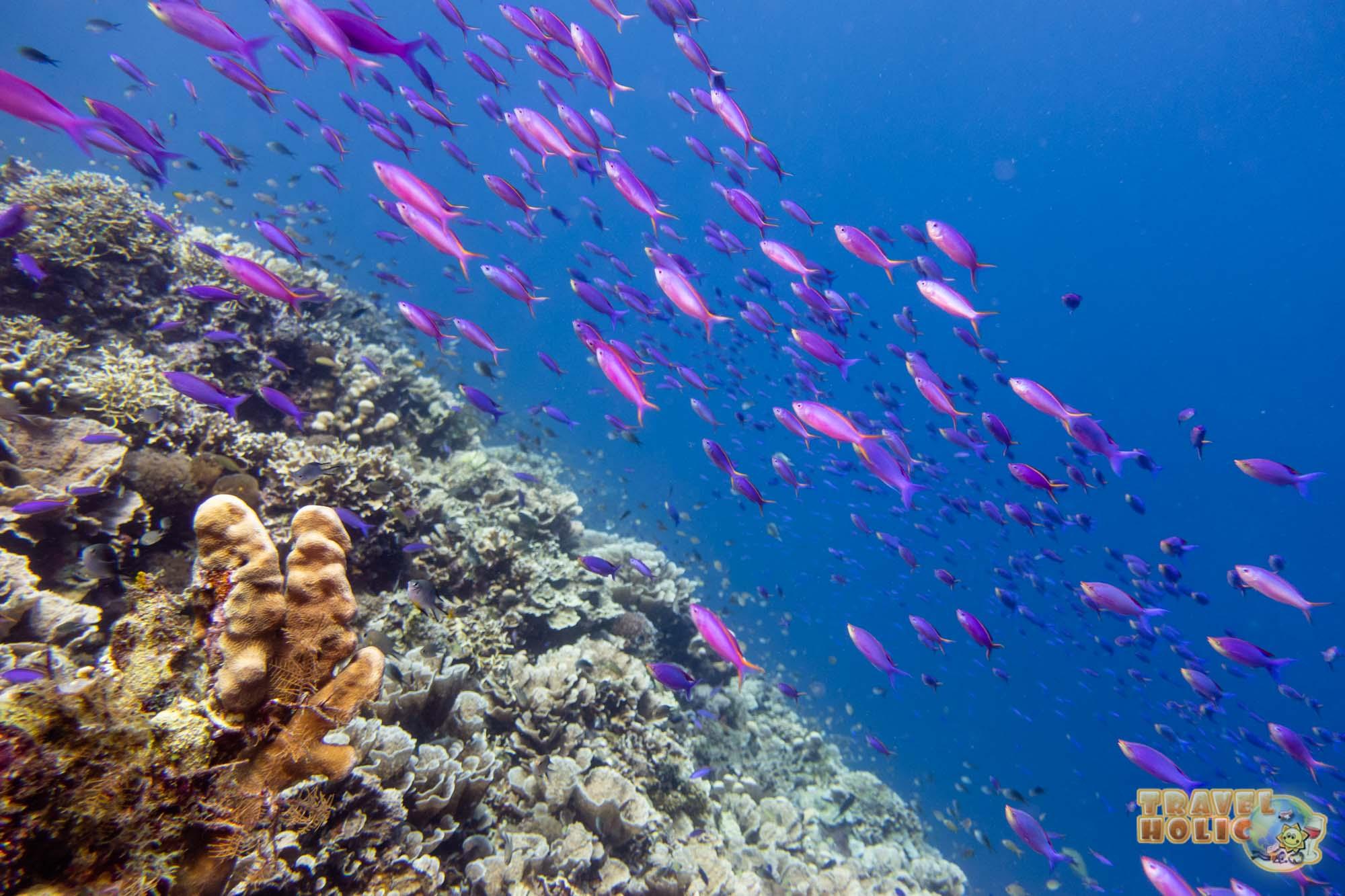 Plongée sous-marine aux Philippines